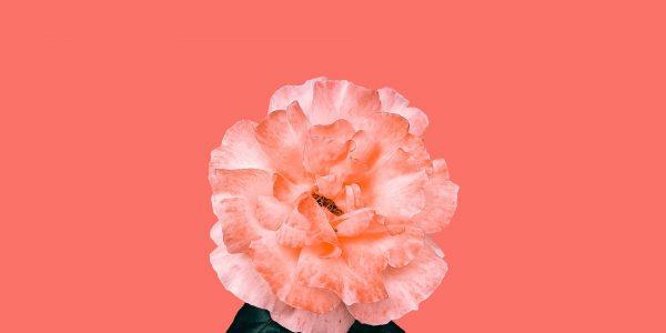 roz corail