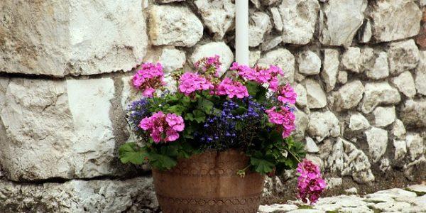 decorarea terasei cu plante